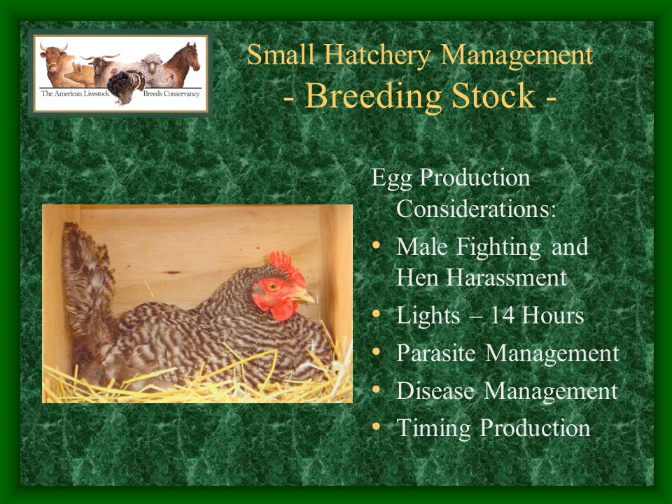 Small Hatchery Management - Breeding Stock -