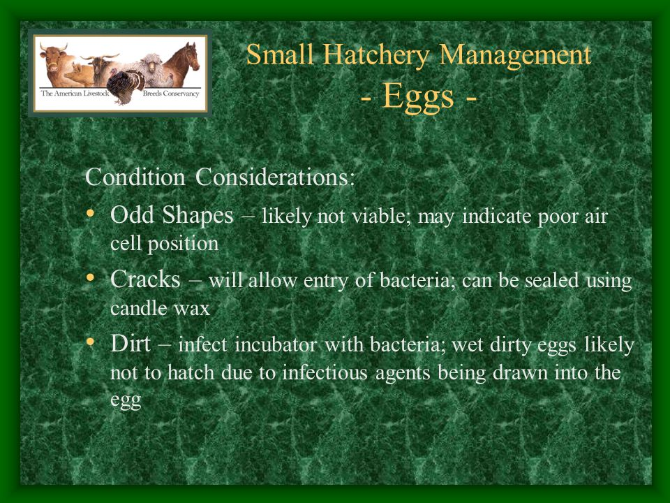 Small Hatchery Management - Eggs -