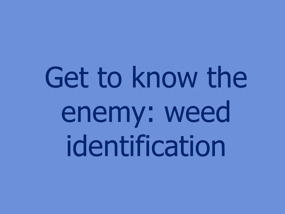 Get to know the enemy: weed identification