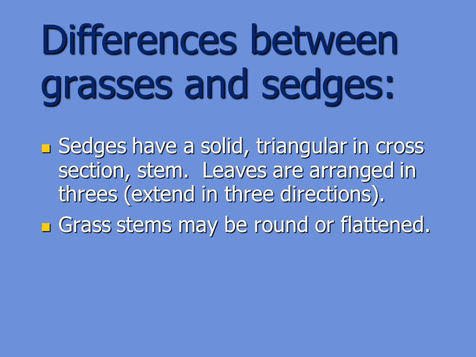 Differences between grasses and sedges: