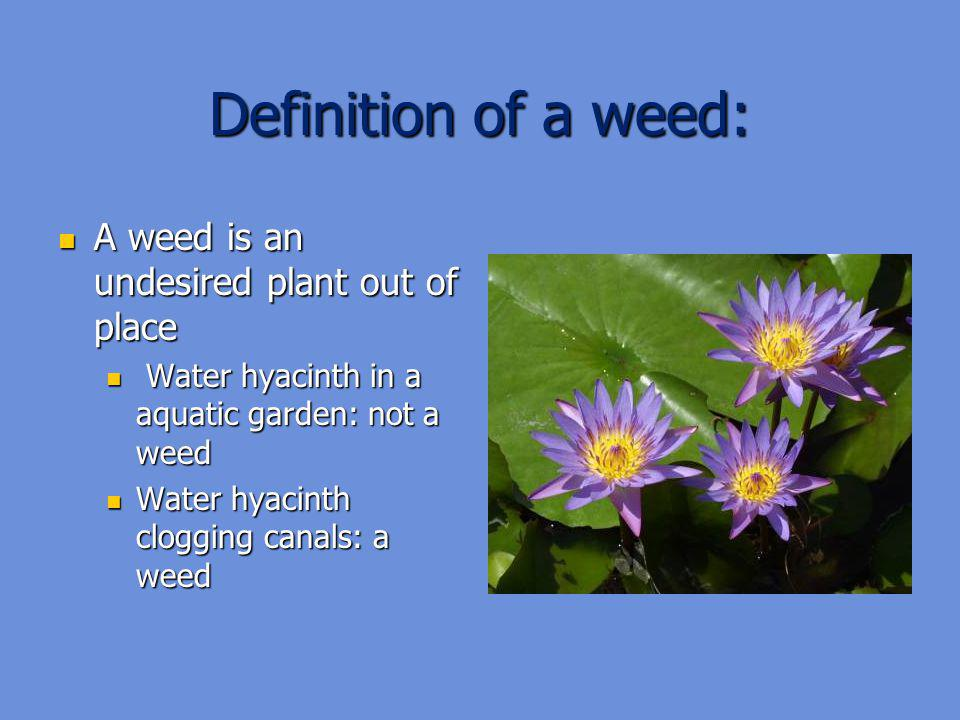 Definition of a weed: A weed is an undesired plant out of place
