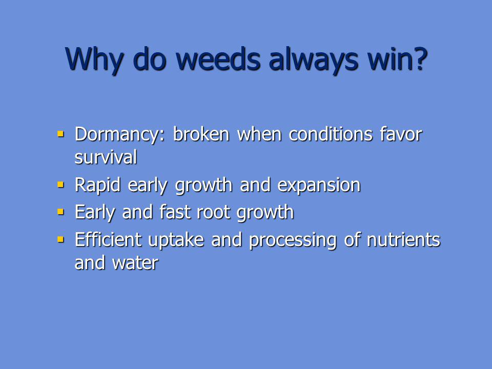 Why do weeds always win Dormancy: broken when conditions favor survival. Rapid early growth and expansion.