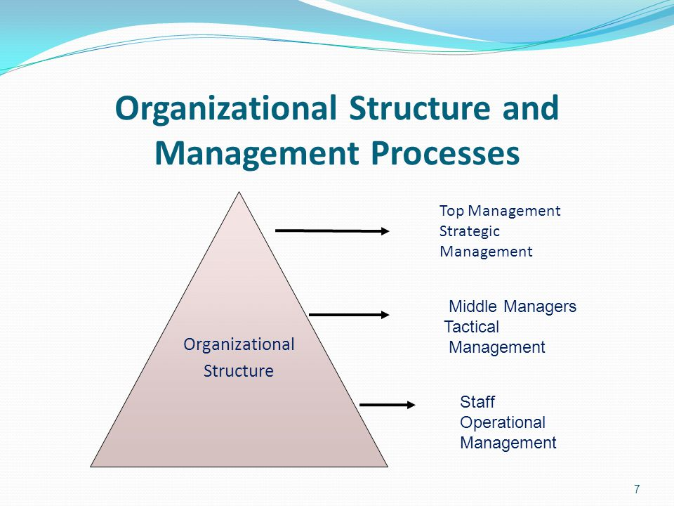 Organizational Structure and Management Processes