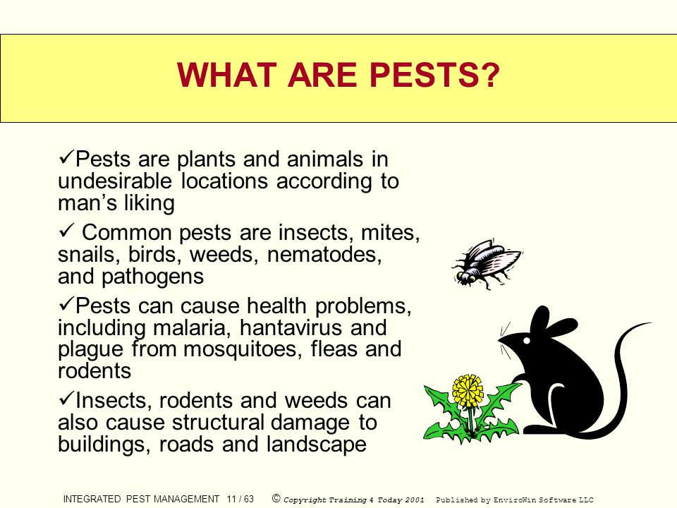 WHAT ARE PESTS Pests are plants and animals in undesirable locations according to man's liking.