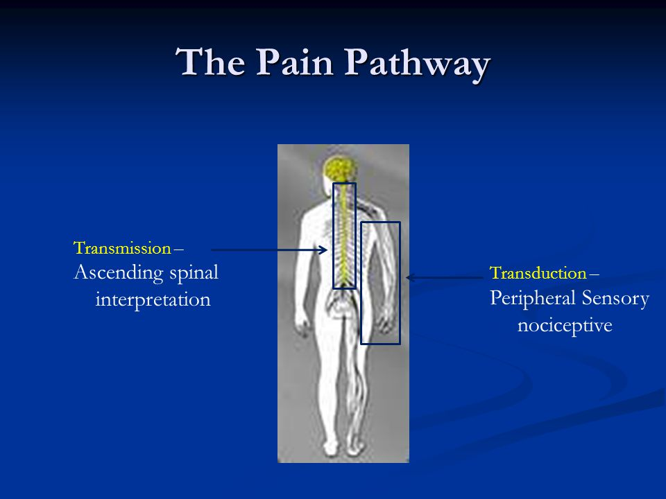 The Pain Pathway Ascending spinal Peripheral Sensory interpretation