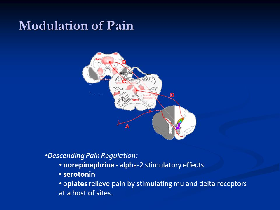 Modulation of Pain Descending Pain Regulation:
