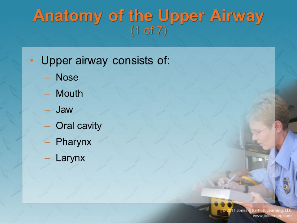 Anatomy of the Upper Airway (1 of 7)