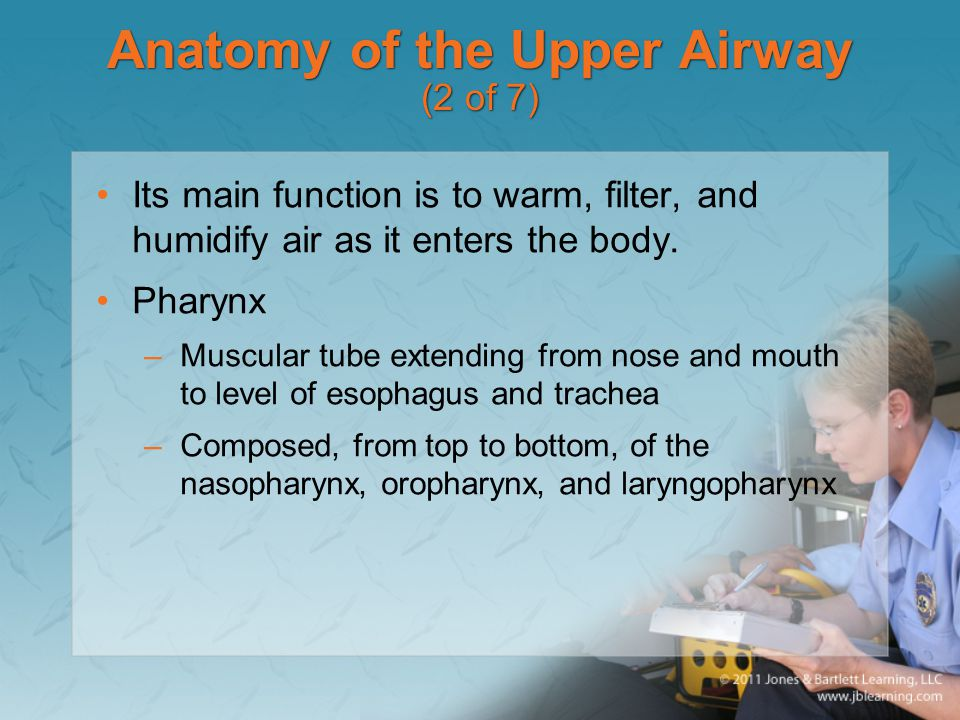 Anatomy of the Upper Airway (2 of 7)
