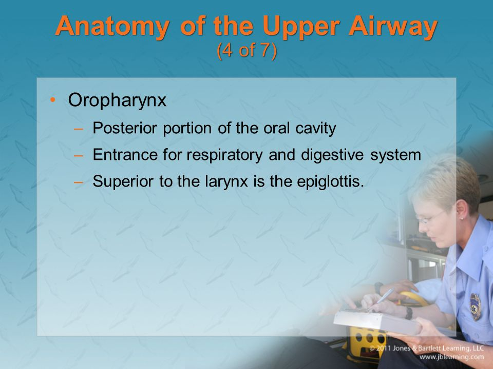 Anatomy of the Upper Airway (4 of 7)