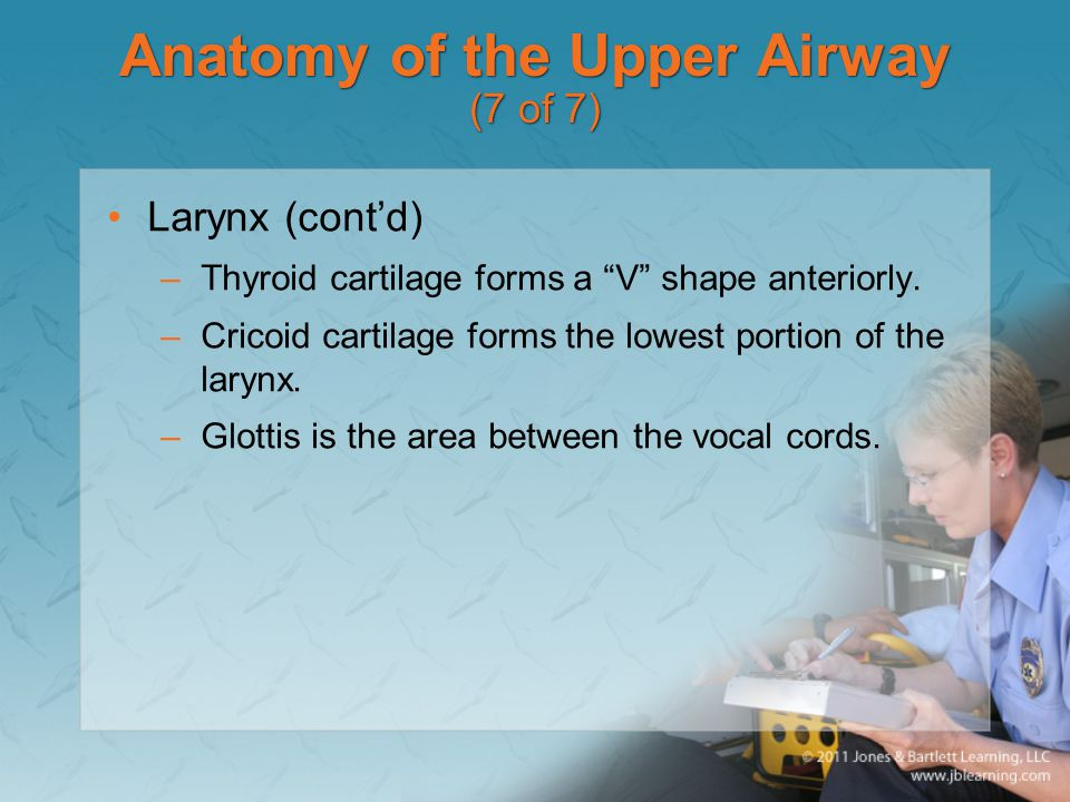 Anatomy of the Upper Airway (7 of 7)