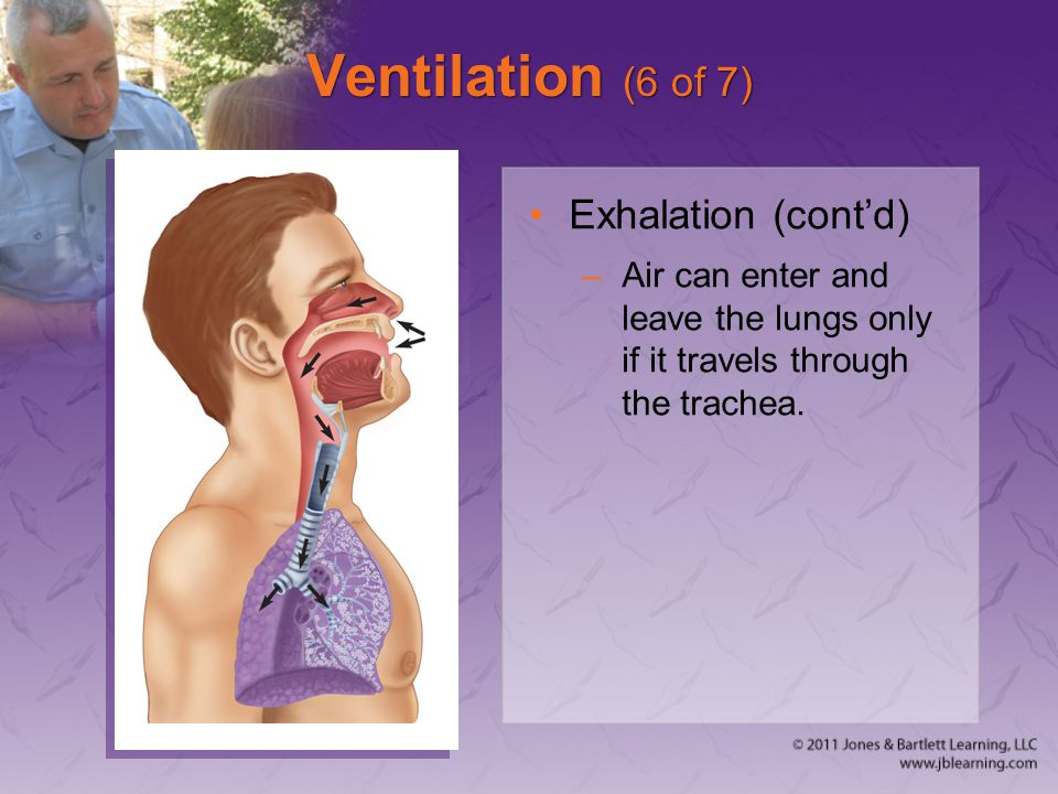 Ventilation (6 of 7) Exhalation (cont'd)