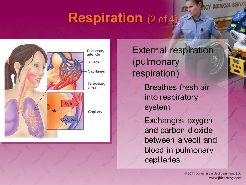 Respiration (2 of 4) External respiration (pulmonary respiration)
