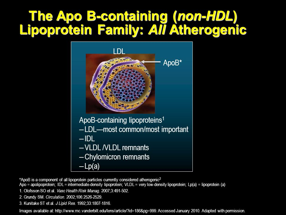 The Apo B-containing (non-HDL) Lipoprotein Family: All Atherogenic