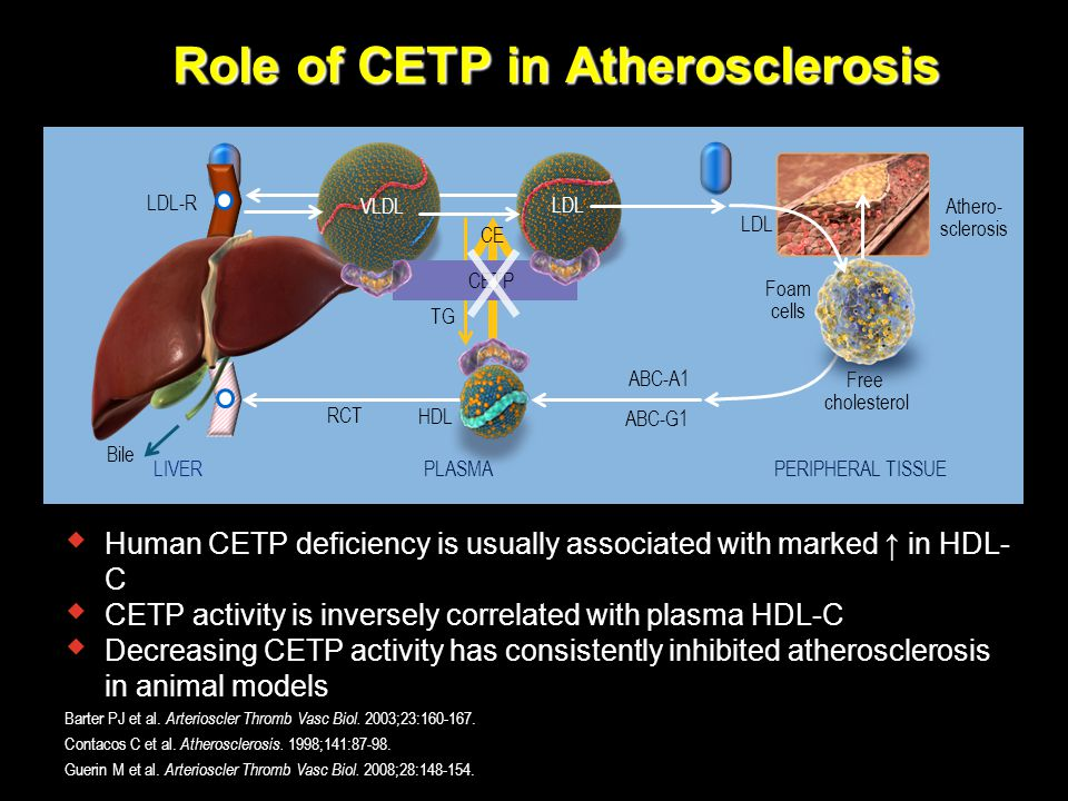 Role of CETP in Atherosclerosis