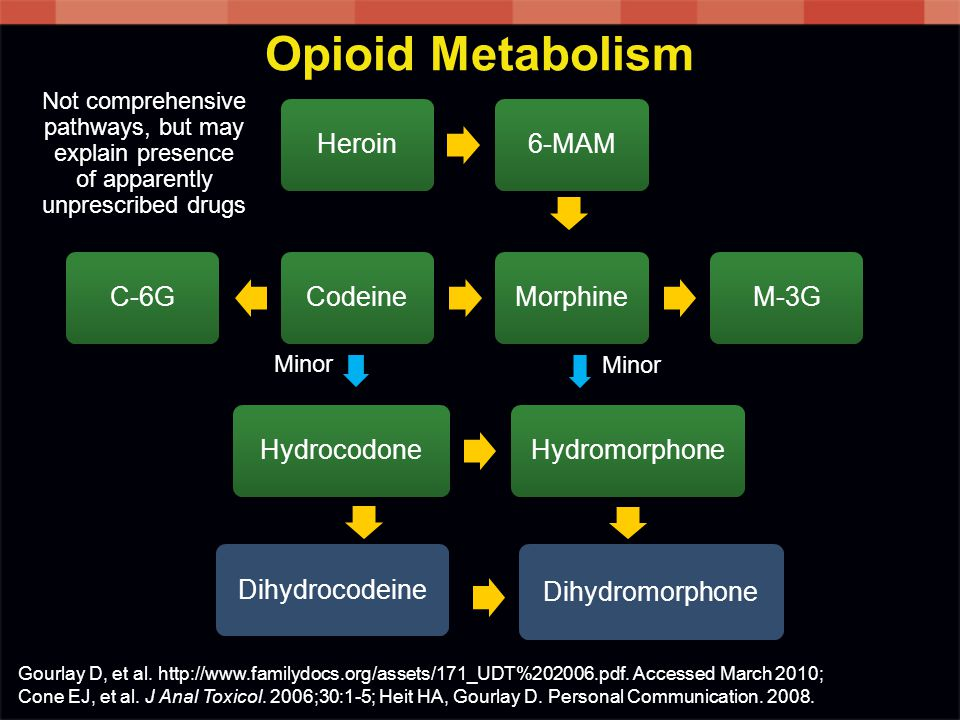 Opioid Metabolism Heroin 6-MAM M-3G Morphine Codeine C-6G Hydrocodone