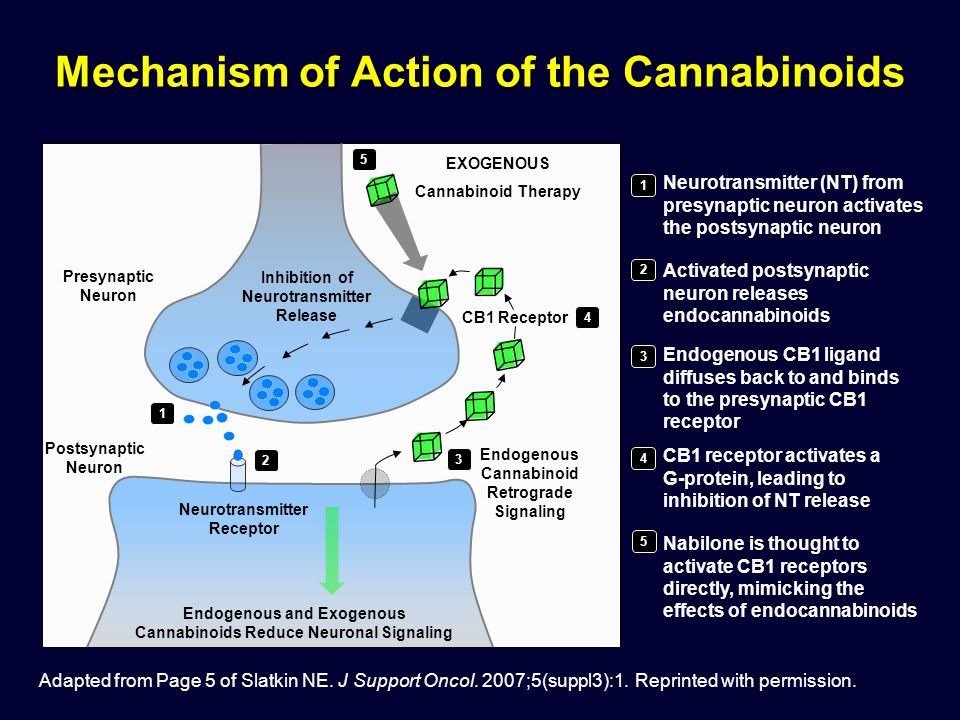 Mechanism of Action of the Cannabinoids