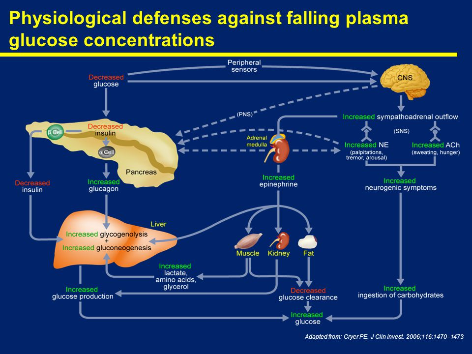 Physiological defenses against falling plasma glucose concentrations