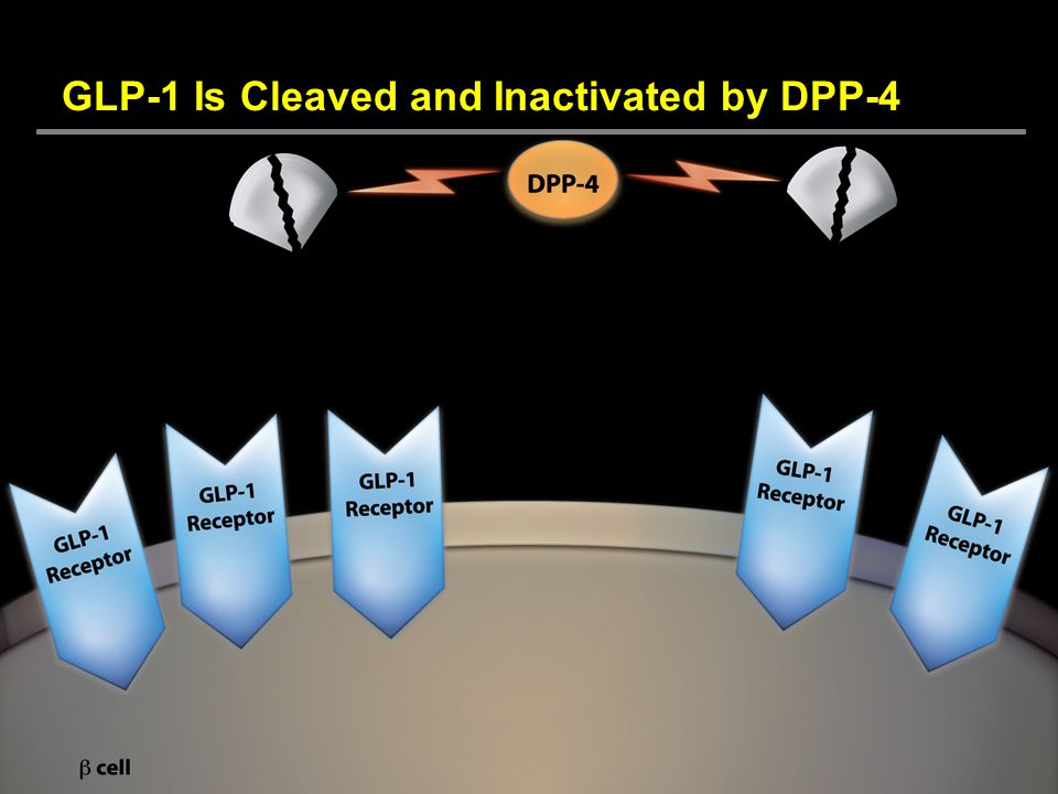 GLP-1 Is Cleaved and Inactivated by DPP-4
