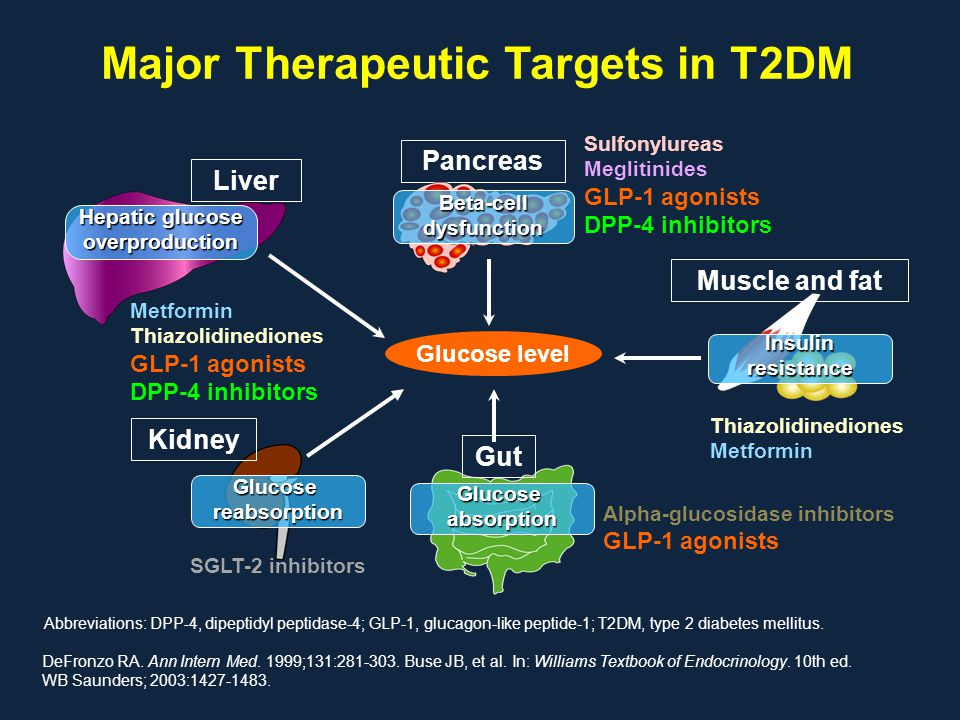 Major Therapeutic Targets in T2DM