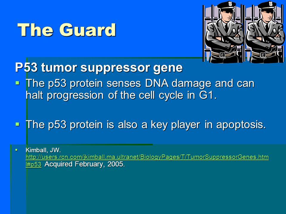 The Guard P53 tumor suppressor gene