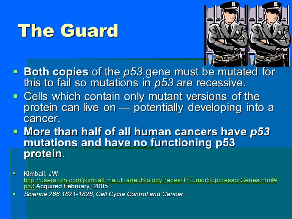 The Guard Both copies of the p53 gene must be mutated for this to fail so mutations in p53 are recessive.