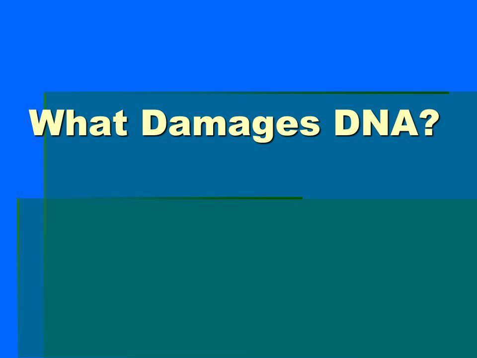 What Damages DNA