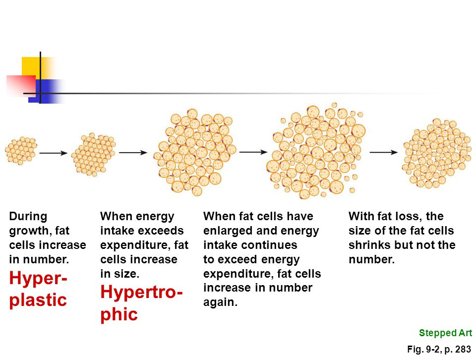phic During growth, fat cells increase in number. Hyper-plastic