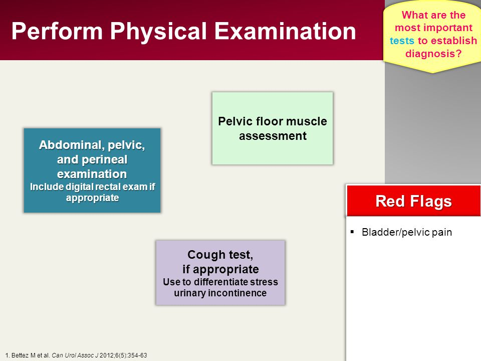 Perform Physical Examination