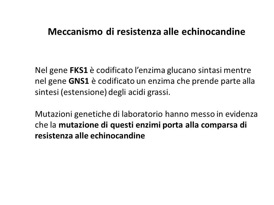 Meccanismo di resistenza alle echinocandine