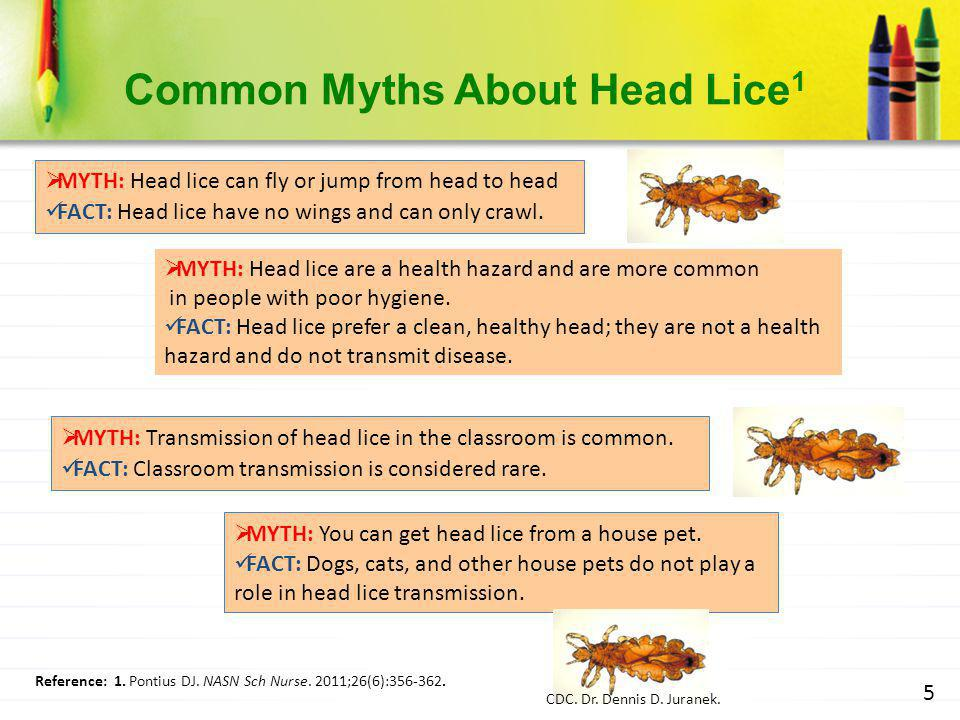 Common Myths About Head Lice1