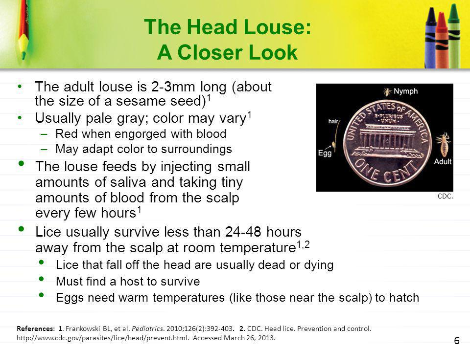 The Head Louse: A Closer Look