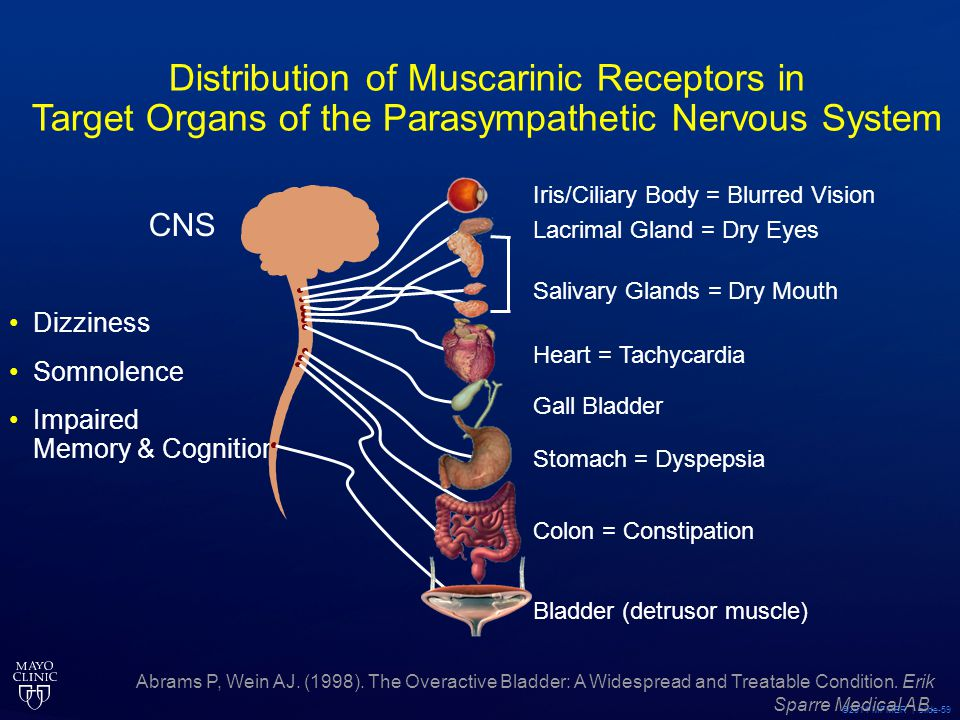 Distribution of Muscarinic Receptors in Target Organs of the Parasympathetic Nervous System
