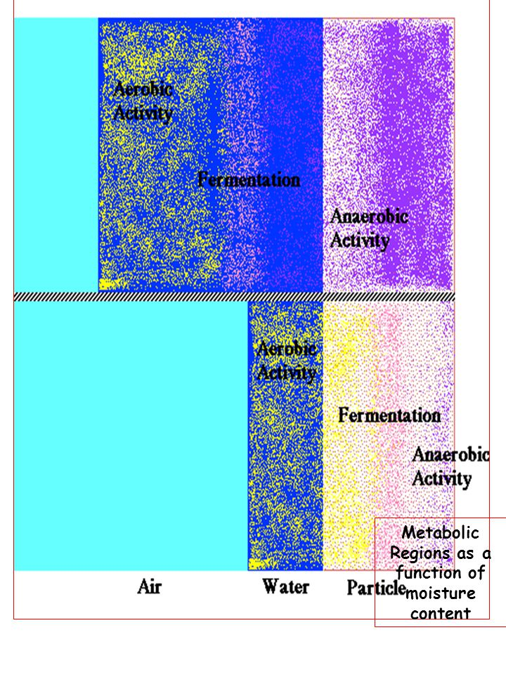 Metabolic Regions as a function of moisture content