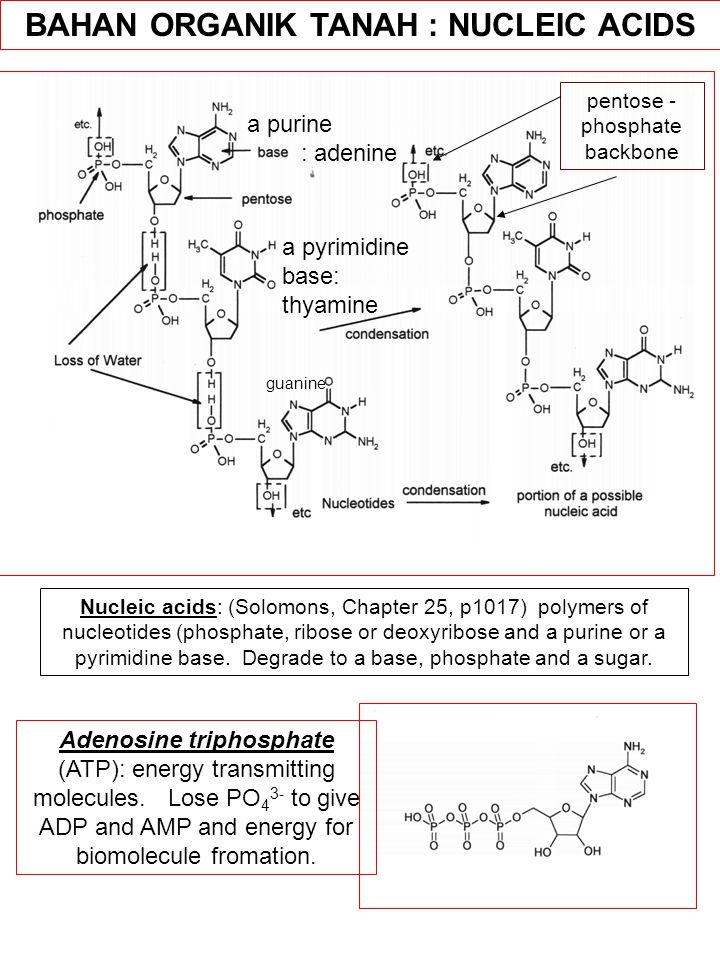 BAHAN ORGANIK TANAH : NUCLEIC ACIDS