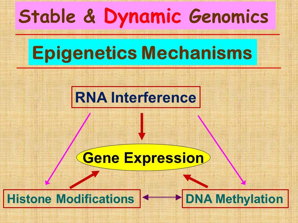 Epigenetics Mechanisms