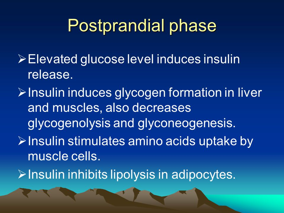 Postprandial phase Elevated glucose level induces insulin release.