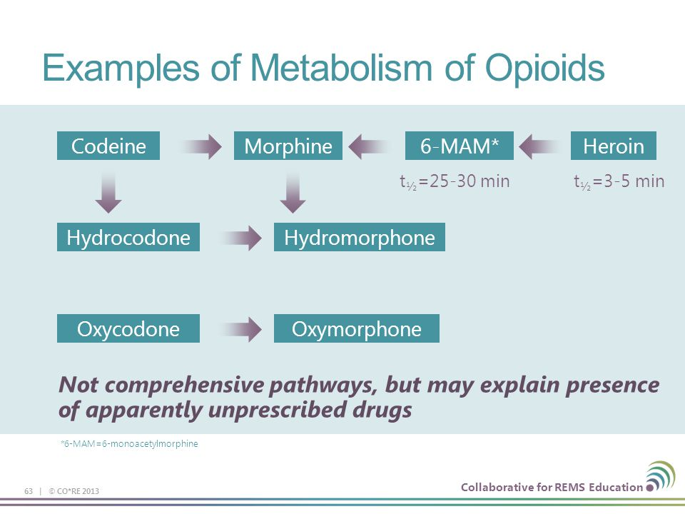 Examples of Metabolism of Opioids