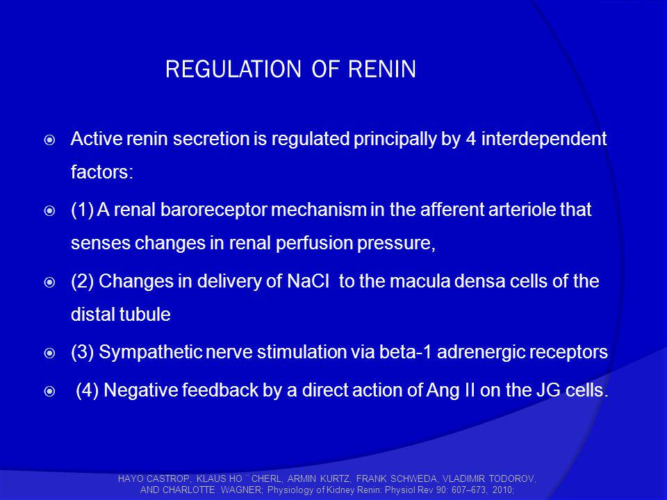 REGULATION OF RENIN Active renin secretion is regulated principally by 4 interdependent factors: