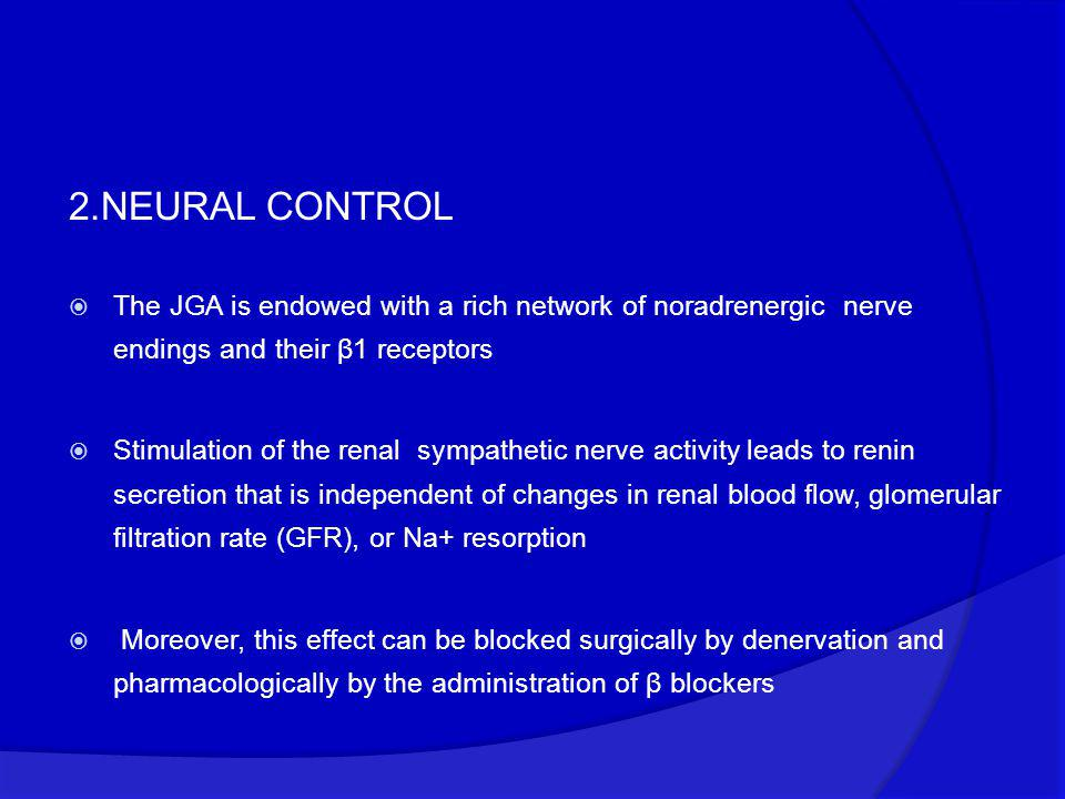 2.NEURAL CONTROL The JGA is endowed with a rich network of noradrenergic nerve endings and their β1 receptors.