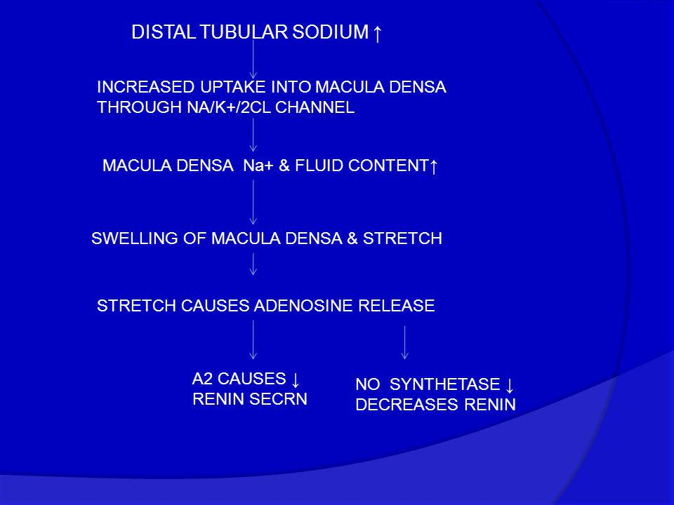 DISTAL TUBULAR SODIUM ↑