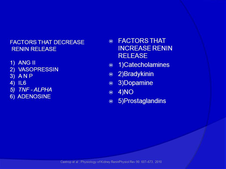 FACTORS THAT INCREASE RENIN RELEASE