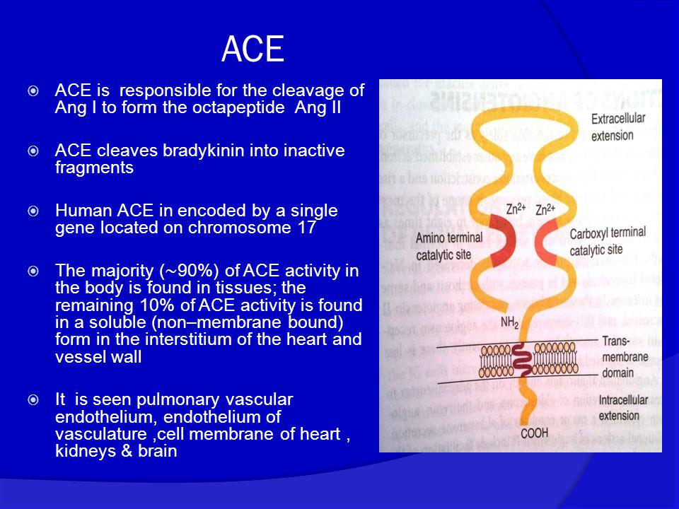 ACE ACE is responsible for the cleavage of Ang I to form the octapeptide Ang II. ACE cleaves bradykinin into inactive fragments.