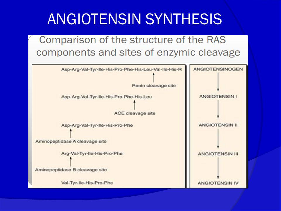 ANGIOTENSIN SYNTHESIS