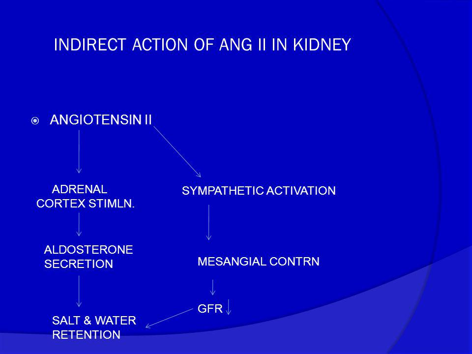 INDIRECT ACTION OF ANG II IN KIDNEY