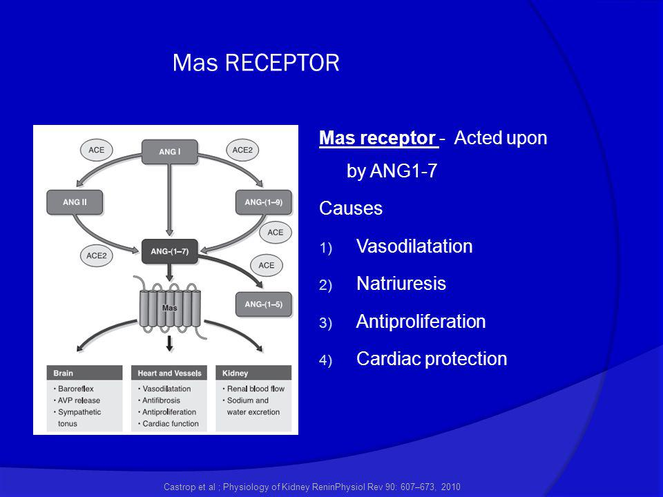 Mas RECEPTOR Mas receptor - Acted upon by ANG1-7 Causes Vasodilatation