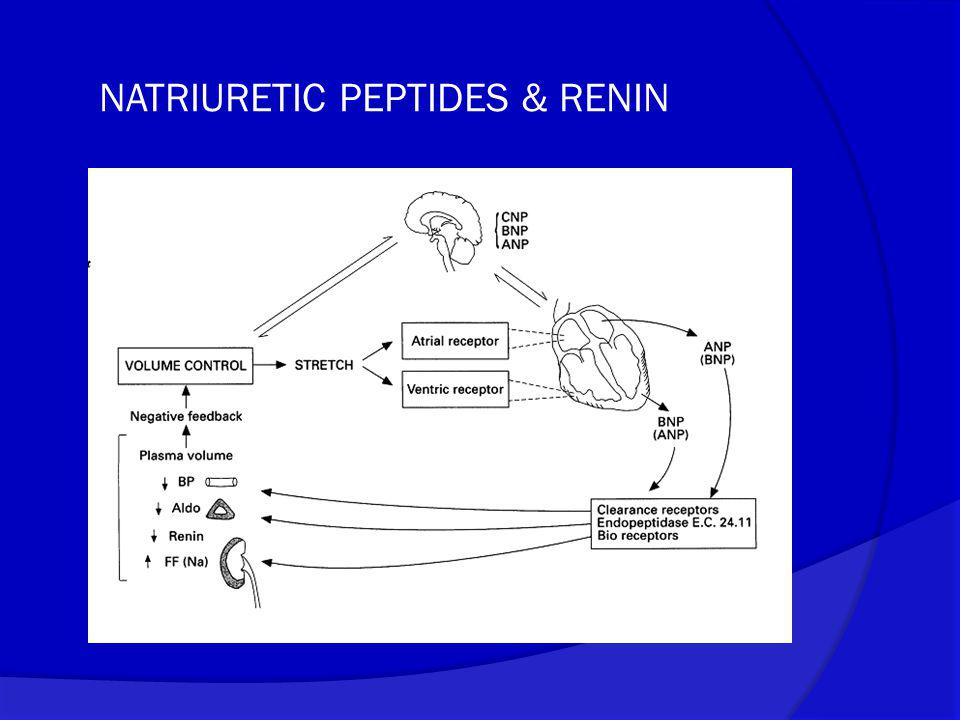 NATRIURETIC PEPTIDES & RENIN