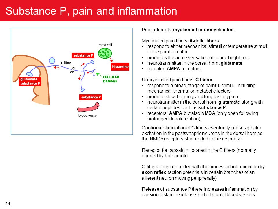Substance P, pain and inflammation