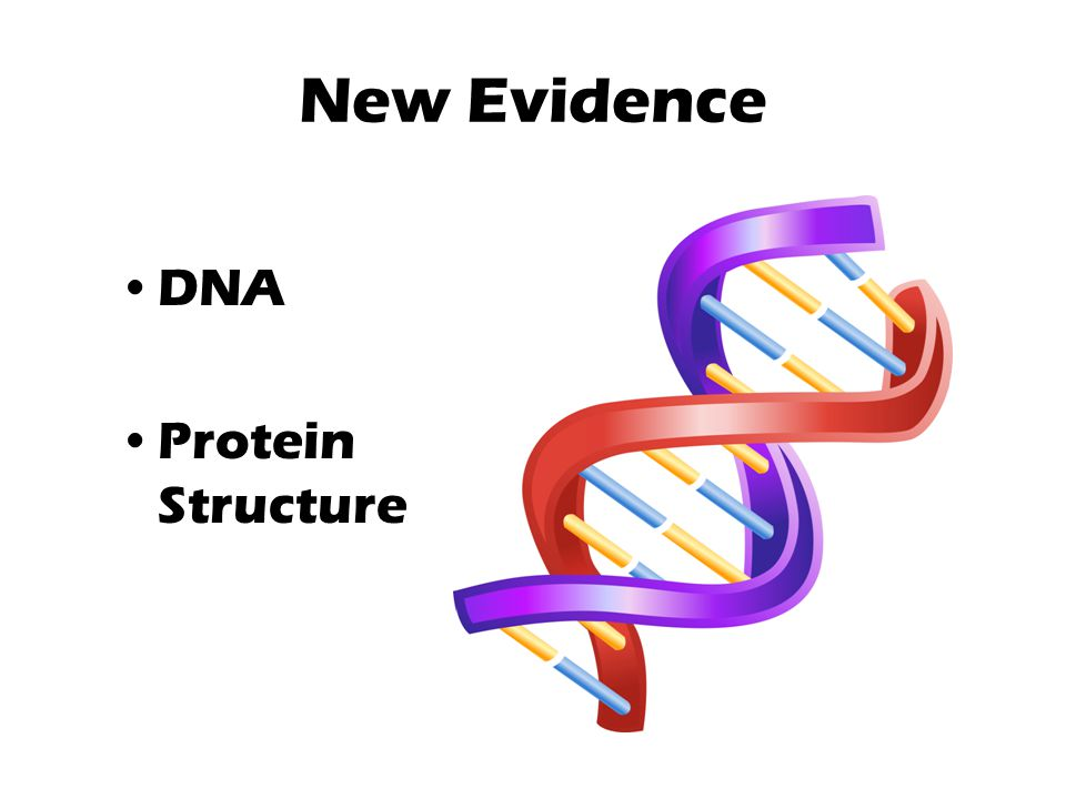 New Evidence DNA Protein Structure