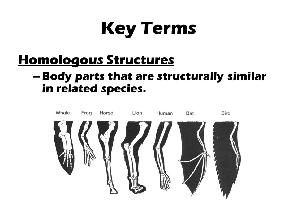 Key Terms Homologous Structures