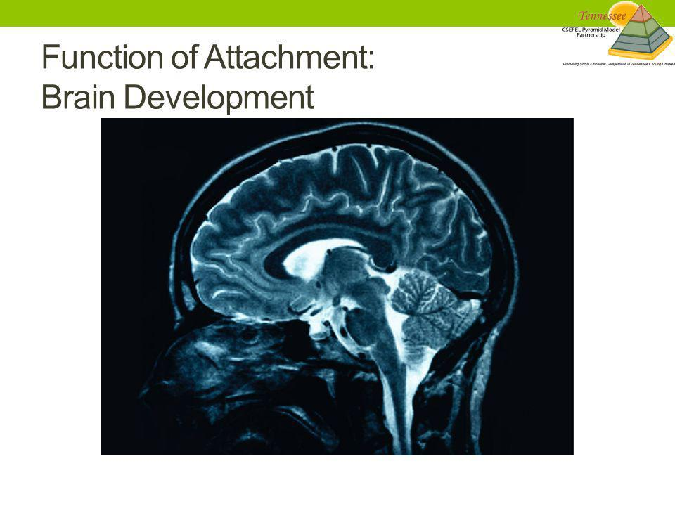 Function of Attachment: Brain Development